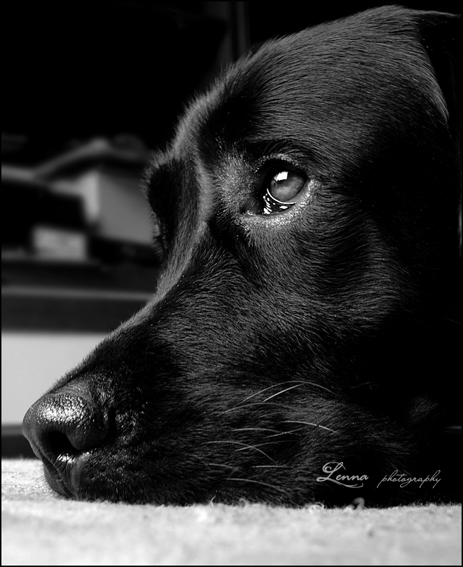 sad_black_dog_by_lenna3